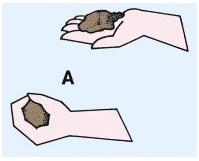 Test du lancer de la boule